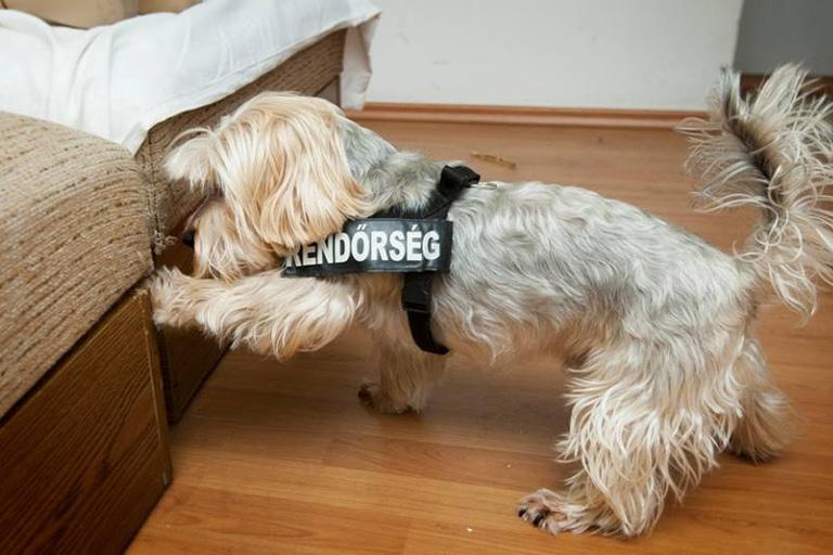 Még a dílert is lenyűgözte Európa legcukibb drogkereső kutyája, József