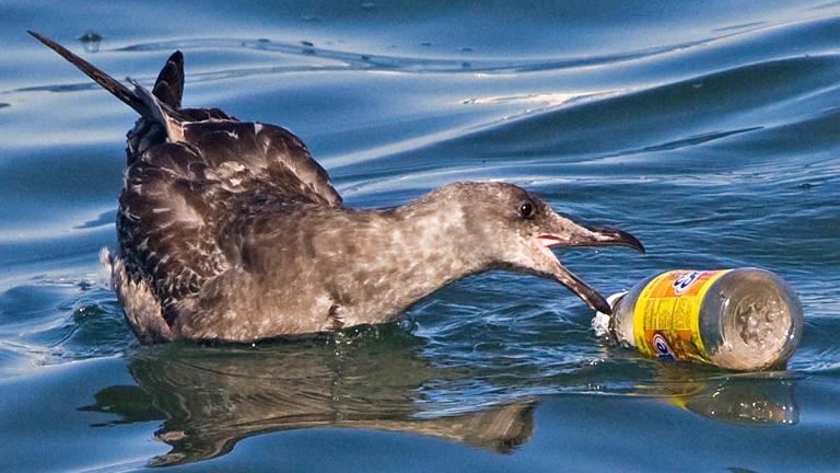 Az állatok sokszor tápláléknak nézik a műanyag hulladékot, amiért az életükkel fizethetnek (Fotó: Tumblr)