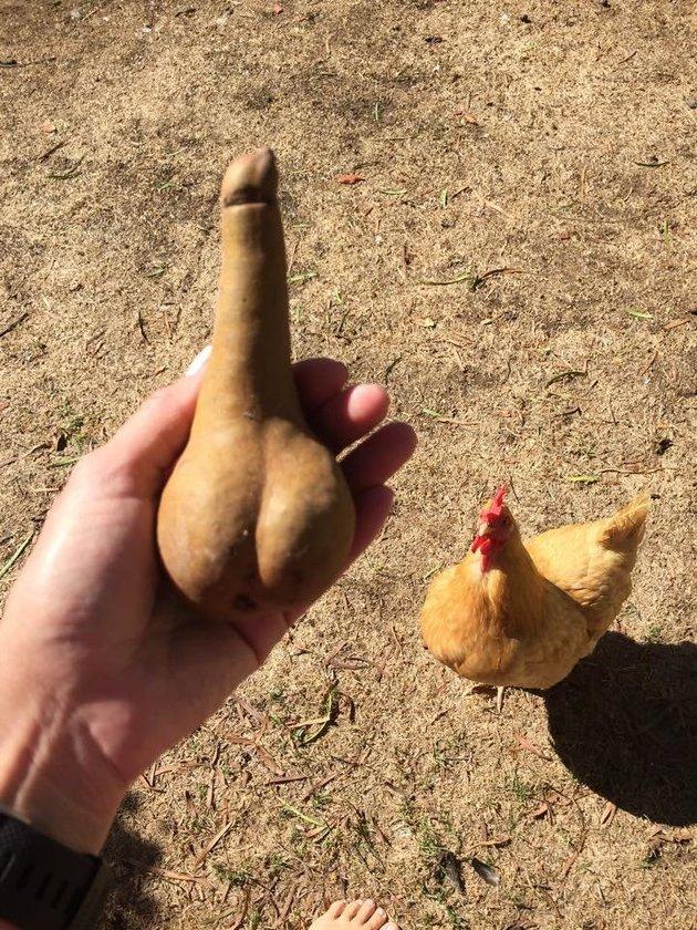 képek a férfi péniszről