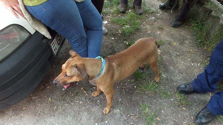Ötven fokos autóba zártak egy kutyát Egerben