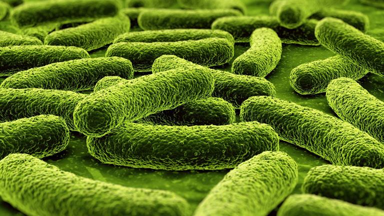 A TBC kórokozója (Fotó: Tumblr)