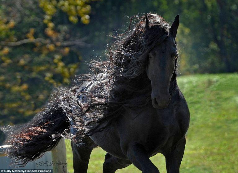 Valószínűleg ez a világ legszebb lova