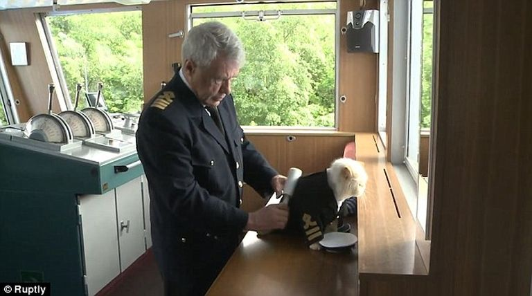 Ez a macska egy hajó kapitánya