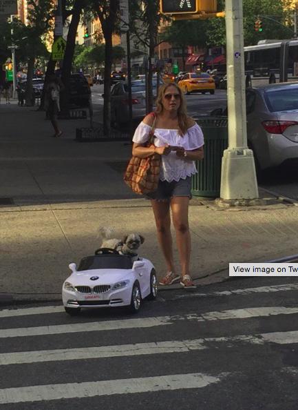 Parányi BMW-vel hasít a kutya