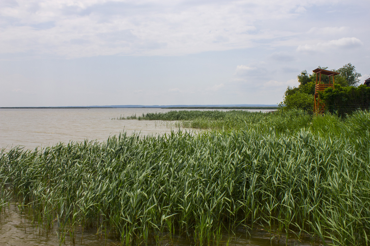 Fertő tó: egy csepp nyugalom az érintetlen természet közepén