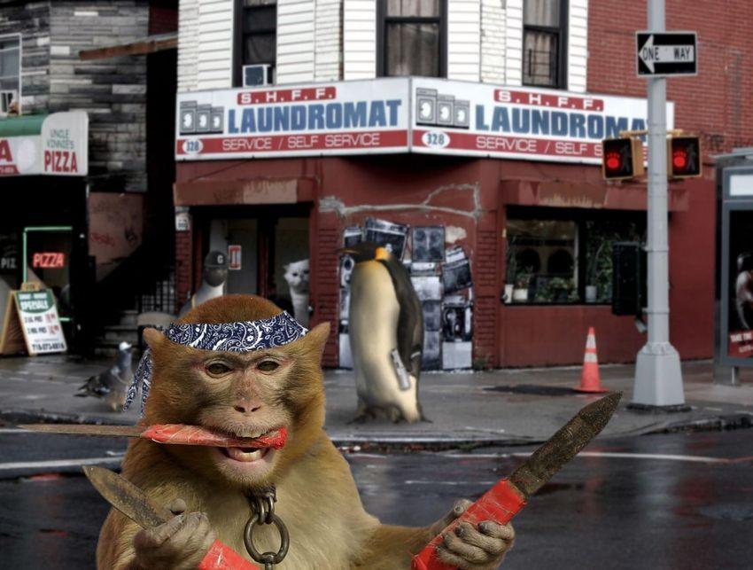 A késsel hadonászó majom meghódított az internetet - vicces fotók