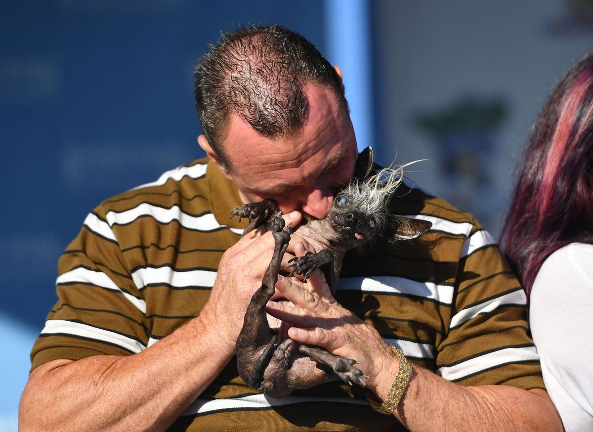 Ő lett idén a világ legrondább kutyája!