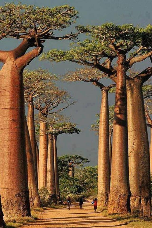 Nézegess képeket a világ legkülönlegesebb fáiról!