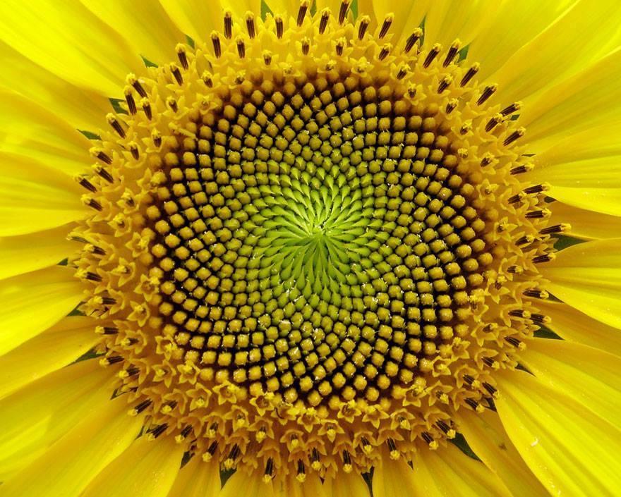 Téged is ámulatban ejtenek a természet geometrikus csodái - fotók