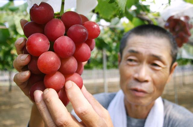 3 millióért adtak el egy fürt szőlőt