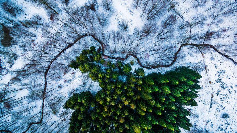 Dán erdő. Természet kategória, 1. helyezett
