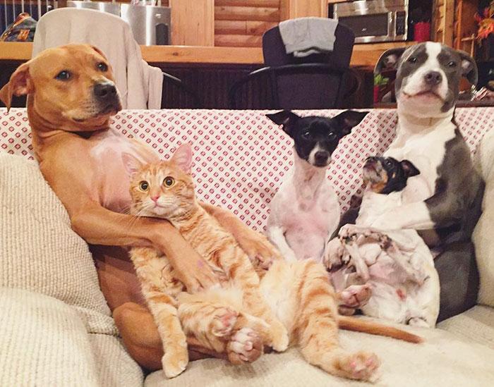 Állatokkal és boldogsággal teli házban él a pár, aki 7 kedvencet fogadott örökbe