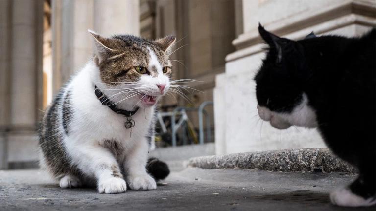 Mediátort kapnak a Downing Street macskái