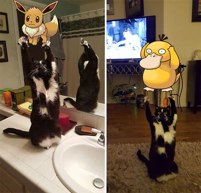 A feltartott kezű macska annyira vicces, hogy muszáj volt kitörnie a Photoshop-háborúnak