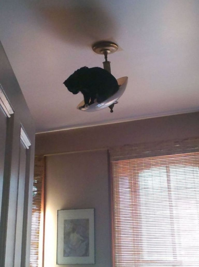A macskákat nem lehet megunni