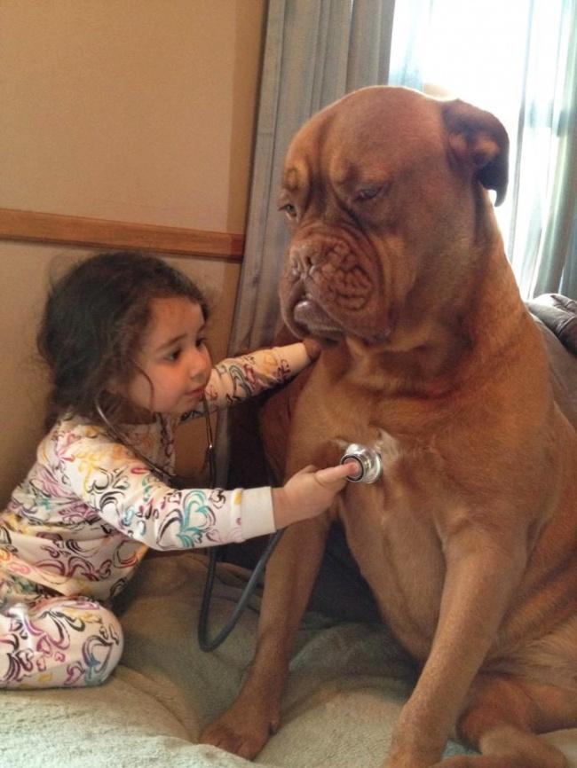 Ha végignézed ezeket a képeket, garantáltan te is akarsz majd kutyát