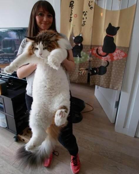 Megáll az eszed Sámsontól, a gigantikus macskától!