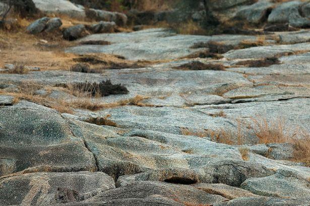 Újabb őrjítő képrejtvény: te megtalálod a leopárdot a fotón?