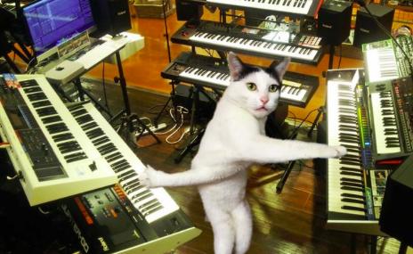 Világhírű lett az összegabalyodott kezű macska - fotók