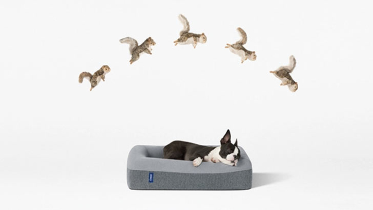 Megérkezett a legkényelmesebb matrac - kutyáknak