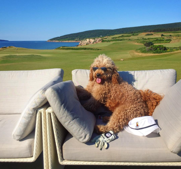 A nyaraló kutyánál aranyosabb ma már nem lesz