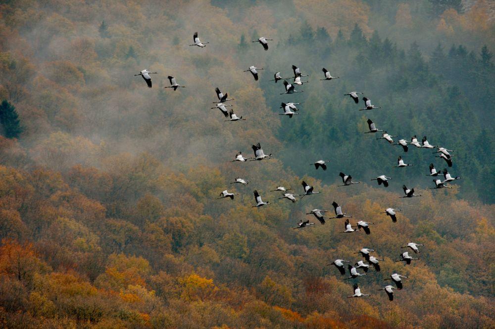 Jön az ősz: pompa és gazdagság vár ránk