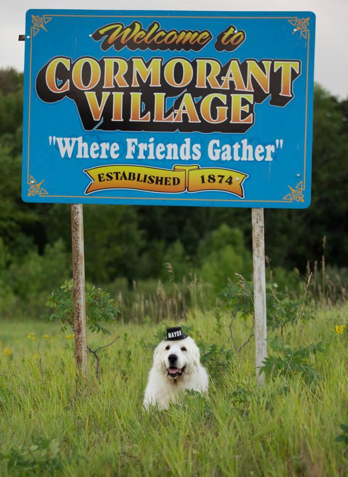 Harmadjára lesz polgármester egy kutya