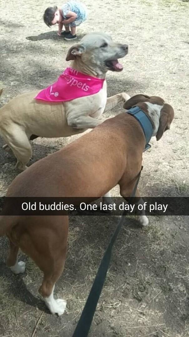 Megható: Snapchaten közvetítte kutyája utolsó napjait