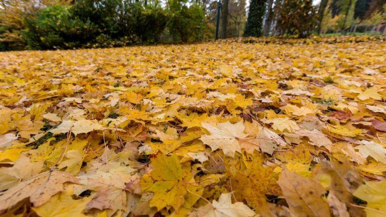 Ez történik ma, az ősz első napján