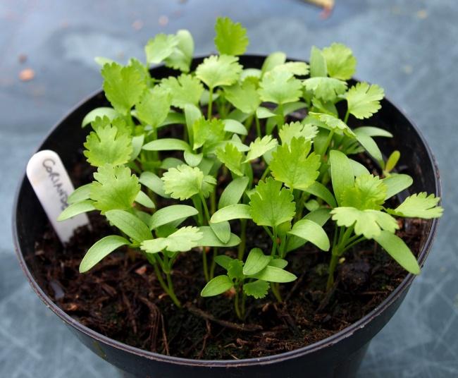 8 fűszernövény, ami könnyen megterem a konyhában is