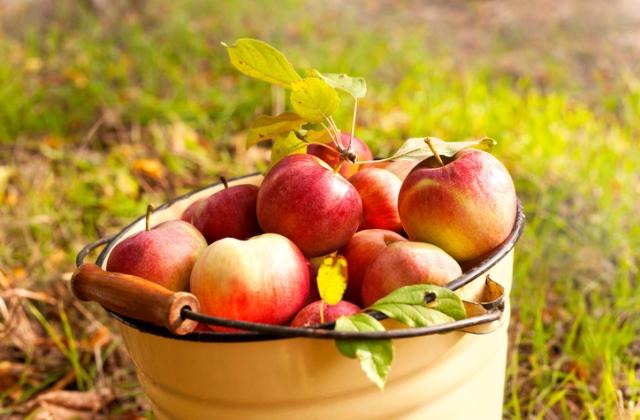 Nincs, aki leszedje a gyümölcsöt