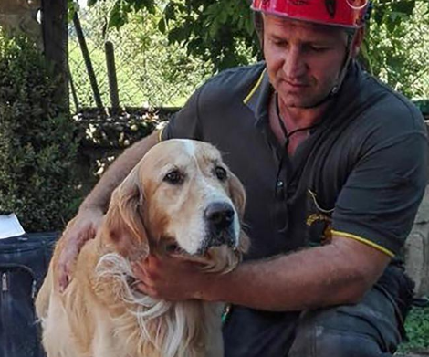 Olaszországi földrengés: 9 nap után kutyát mentettek ki a romok közül