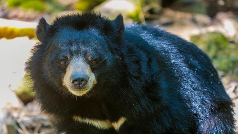 Közelharcban nyomott le egy medvét a 63 éves japán halász