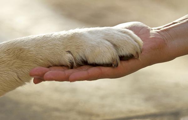 10 lecke, amit a kutyáktól tanítanak nekünk az életről