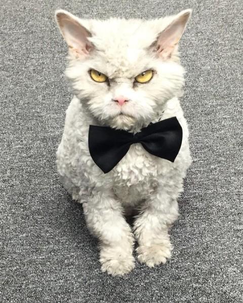 Ismerd meg az eszelősen gonosz tekintetű macskát!
