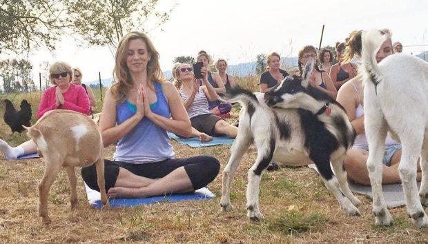 Itt a kecskés jóga, és egyszerűen fantasztikus!