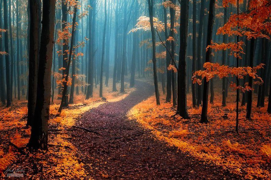 Lélegzetelállító fotók, amik feltárják az őszi természet csodáit