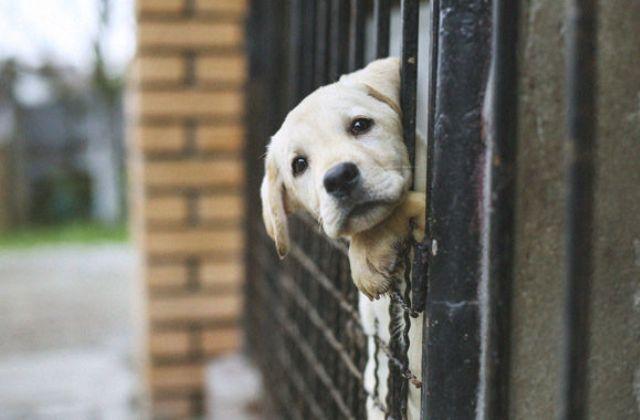 Megmentenél egy elhagyott állatot? Ez az örökbefogadás menete!