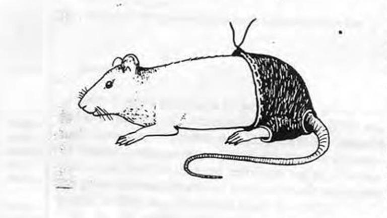 A kísérleti patkánynadrág ábrája (Kép: Annals of Improbable Research)