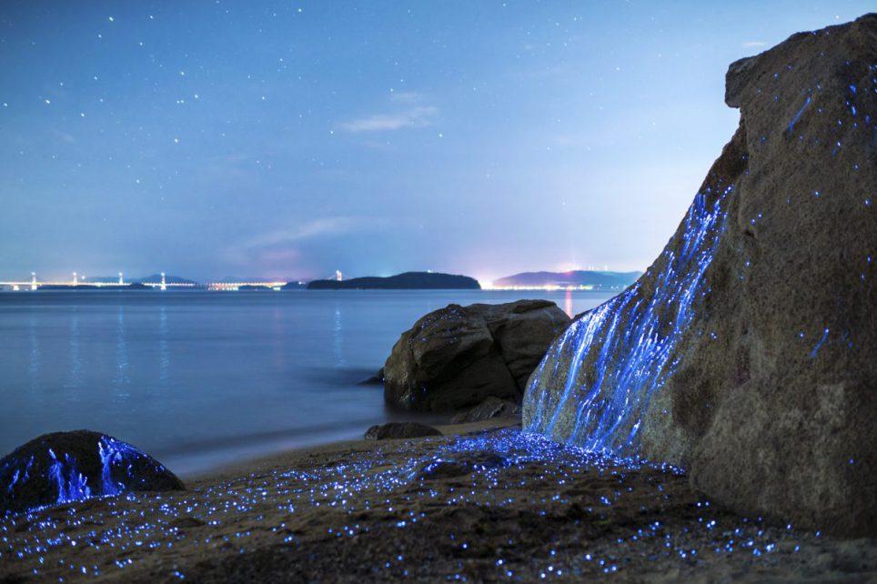 Parányi rákoktól borultak fényárba a sziklák - fotók