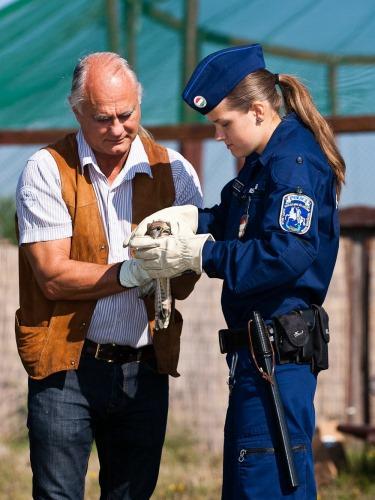 A létavértesi rendőrök találták meg a sérült madarat