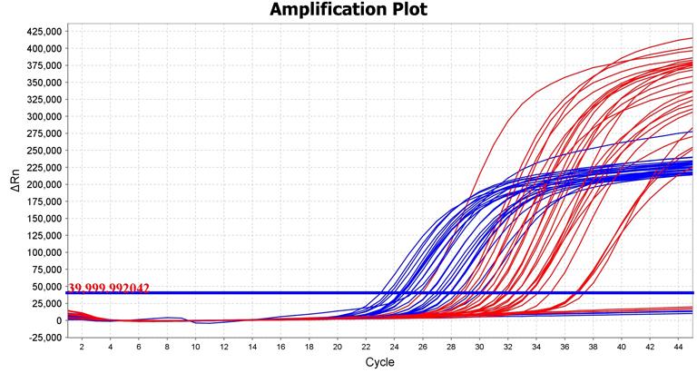 A PCR-eljárás során ilyen grafikonok jelzik az adott DNS jelenlétét. Minél előbb indul el a görbe felfelé, annál több van a vizsgált mintában (Kép: Neumann Diagnostics)
