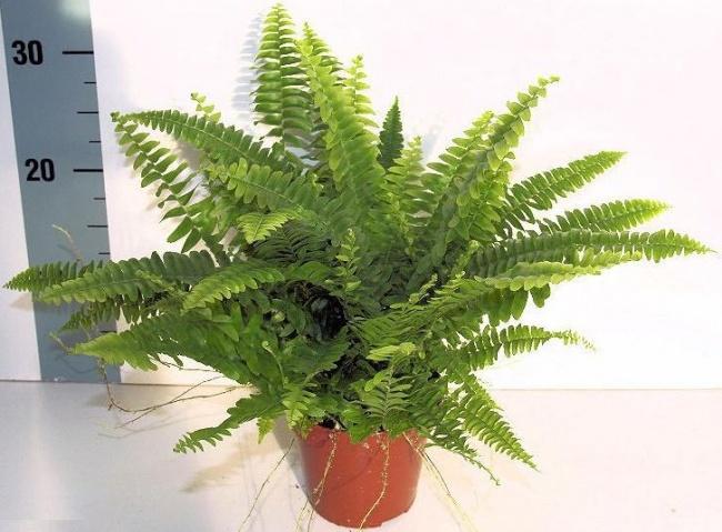 8 szobanövény, ami jobban tisztítja a levegőt, mint bármilyen gép
