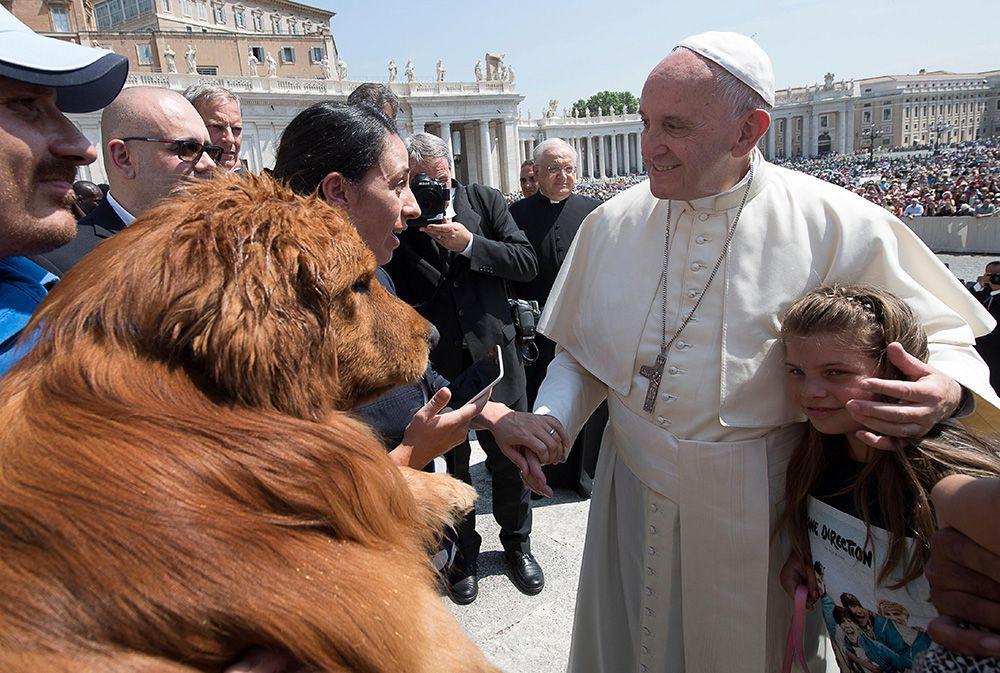 Cuki kutya hekkelte meg a pápa fotóját