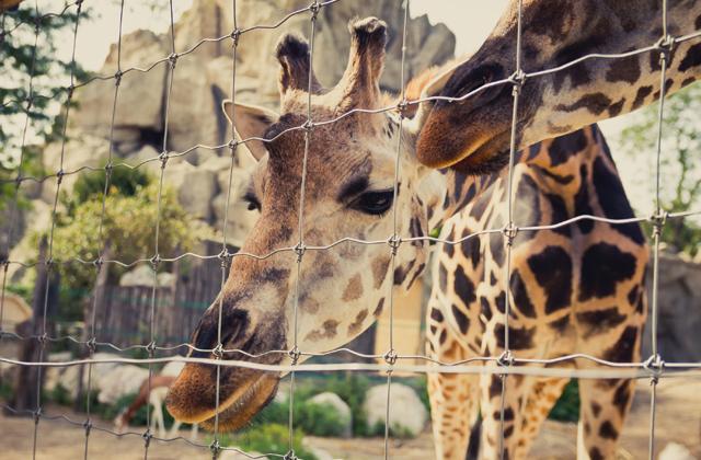 Ingyen mehetnek Állatkertbe a terézvárosiak