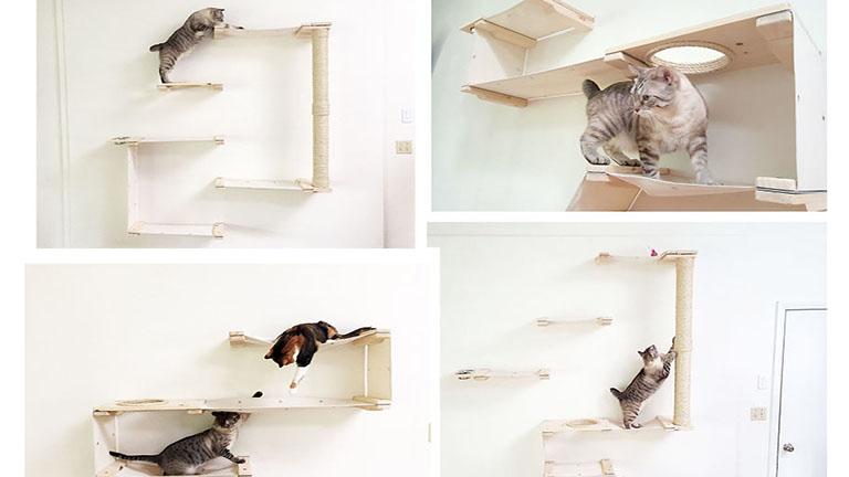 Ha ezt megveszed a macskádnak, egy életre hálás lesz érte