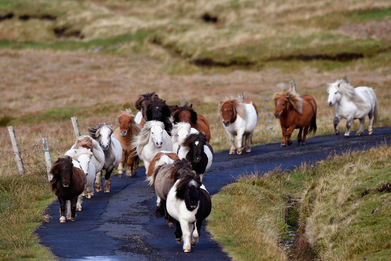 Mindössze harmincan lakják ezt a mesés kis skót szigetet - fotók