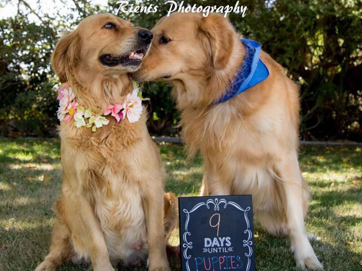Cuki fotósorozatot kapott a terhes kutya