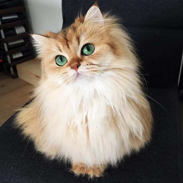 Ők a világ leggyönyörűbb macskái - fotók