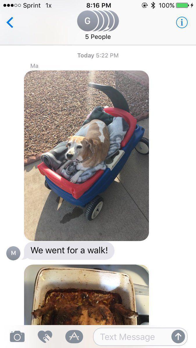 Csodás utolsó nappal ajándékozták meg a haldokló kutyust